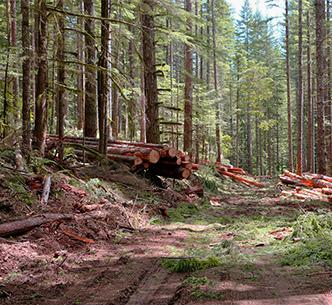 bosbouw-s2